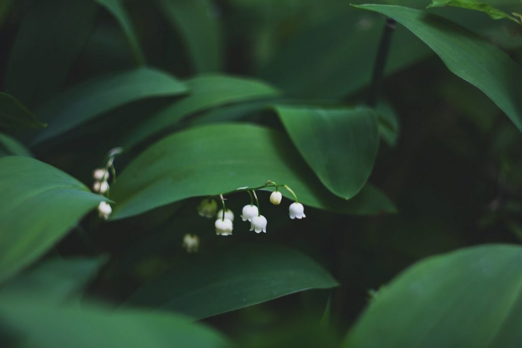 shallow focus of flower - fragrance recommendations for April 2021