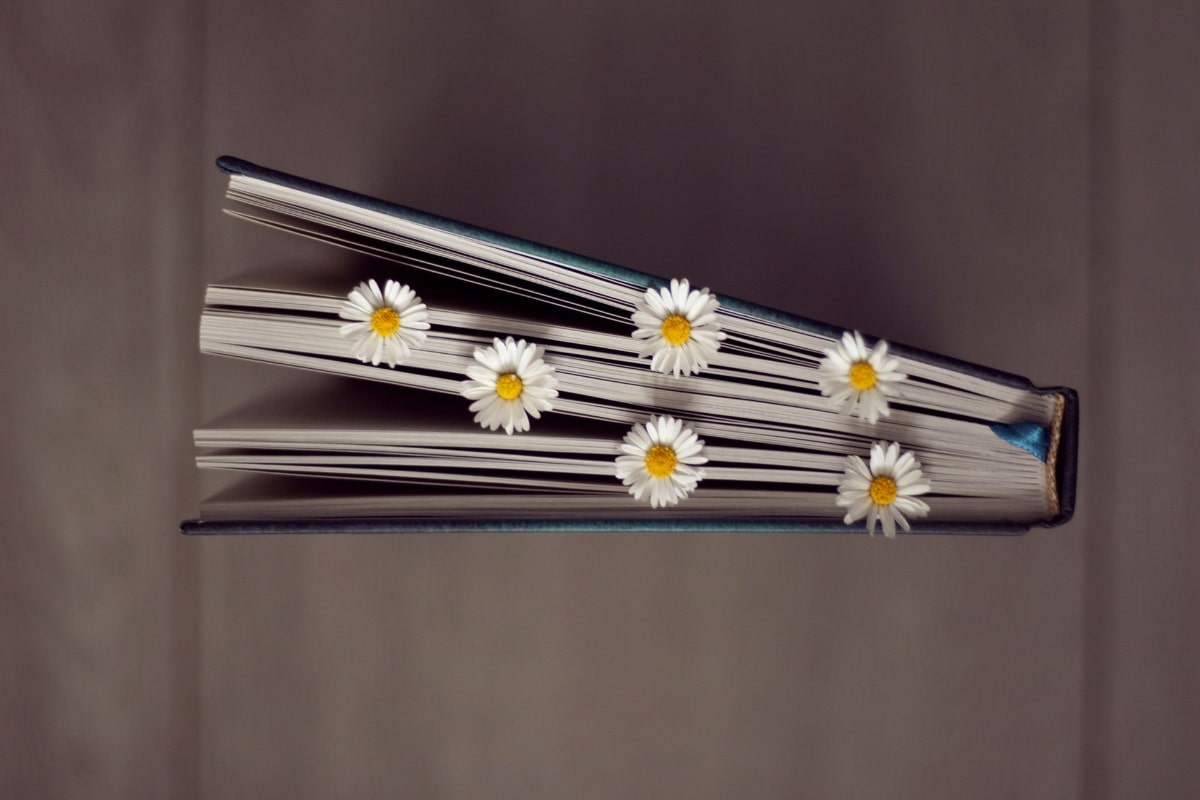 daisy flowers in book - 5 fragrance recommendations for May 2021