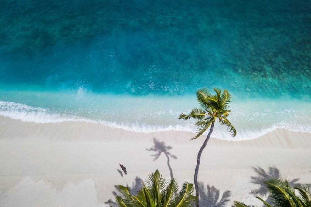 5 fragrance recommendations for july 2021 - beach and palm tree
