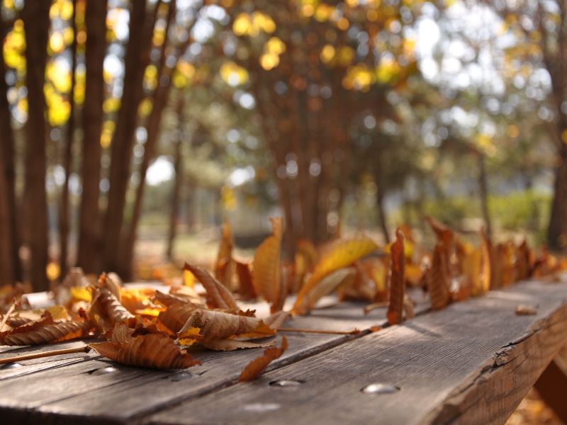 fallen leaves on the table