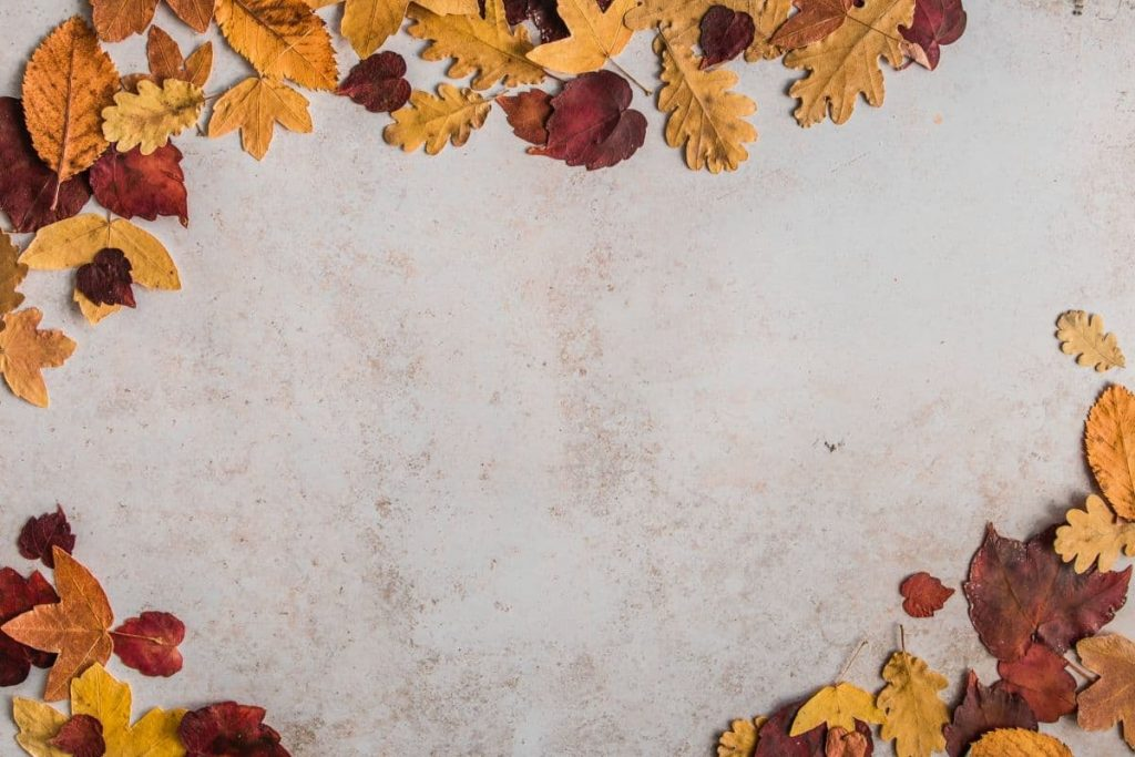 dried leaves - Best Fall Perfumes For Women